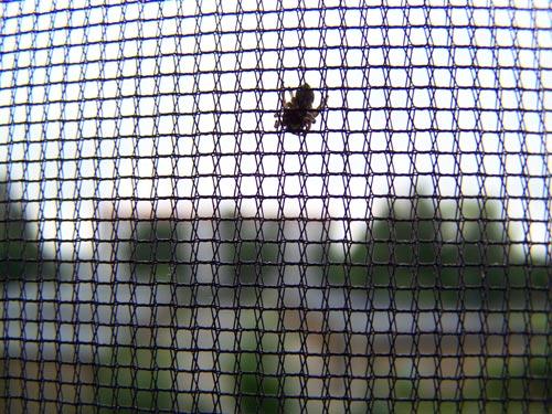 Fenster Insektenschutznetz, Mückenschutz