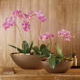 orchidee richtige pflege f r zimmerpflanzen. Black Bedroom Furniture Sets. Home Design Ideas
