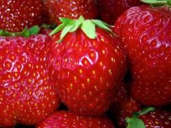 Erdbeerpflanze richtig anpflanzen, pflegen und überwintern