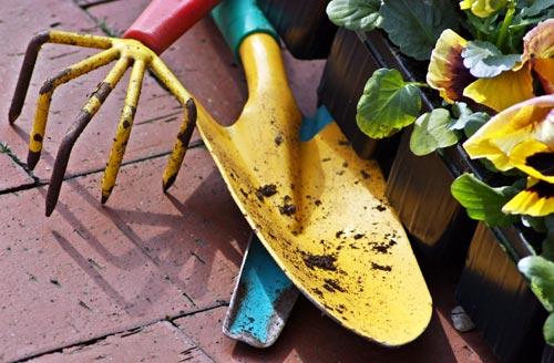 Blumen pflanzen  Pflanzen & Blumen - Ratgeber & Tipps | Haus-Heimwerker.de