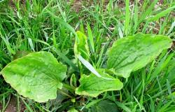 Unkraut bekämpfen - Ratgeber & Tipps - umweltschonend oder chemisch mit Herbiziden