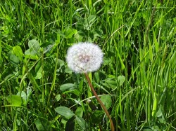 Rasen richtig pflegen - Tipps für ein gesundes Grün
