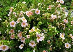 Sträucher im Garten richtig einpflanzen - Tipps & Anleitung