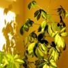 Zimmerpflanzen richtig pflegen - Tipps & Infos - So bleiben sie gesund und kräftig