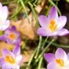 Gartenmonat Mai: Was ist zu tun?