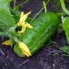 Gartenarbeit im Juni: mit der richtigen Pflege jetzt für längere Blühzeiten und eine reiche Ernte vorsorgen
