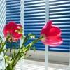 Heisse Tage, milde Nächte – Tipps für eine kühle Wohnung