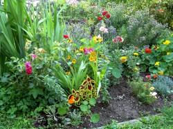 Wässern, ernten, säen und beschneiden: Der Garten im Juli