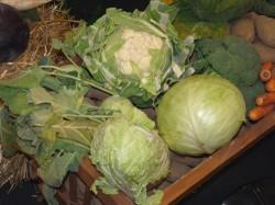 Geerntetes Obst und Gemüse ideal lagern – im selbstgemachten Mini-Erdkeller
