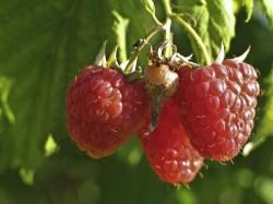 Gartenarbeit im August: Was steht jetzt an?