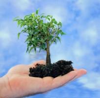 Bäume im eigenen Garten einpflanzen - Standortwahl, Vorbereitung, Einpflanzung, Pflege