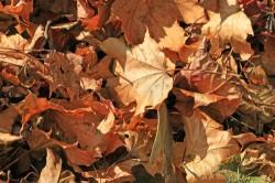Der Garten im November: Vorbereitung auf den nahenden Winter