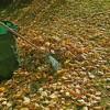 Erntemonat Oktober Was im Garten jetzt zu tun ist
