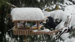 Winterliche Vogelfütterung im heimischen Garten