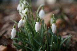 Lebewohl, Winter! Der Garten im Februar